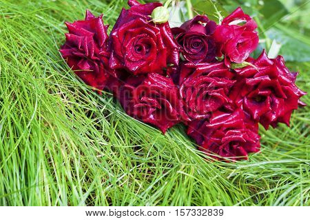 Bouquet of scarlett roses lying on green grass