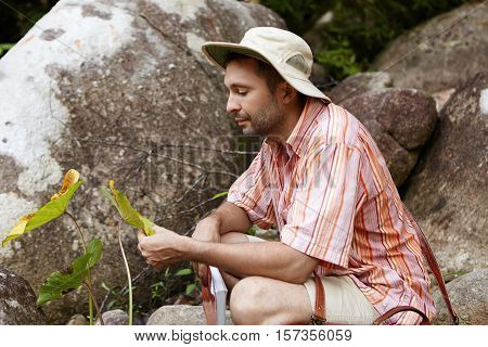 Bearded Biologist Wearing Hat Sitting Among Rocks And Holding Leaves Of Green Plant With Spots, Look