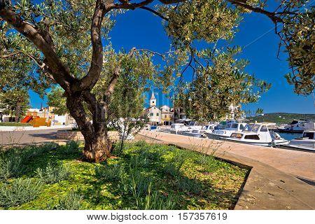 Pirovac olive tree architecture view Dalmatia Croatia