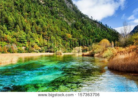 Amazing River With Azure Crystal Water Among Evergreen Woods
