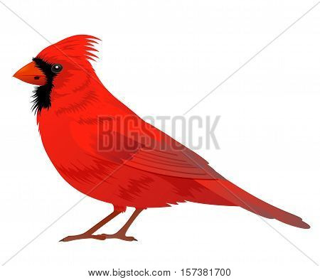 Northern Cardinal bird on a white background. Vector illustration.