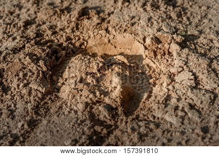 the trace of the hoof of the horse on the sand