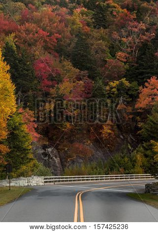 Wall Of Trees Changing Color