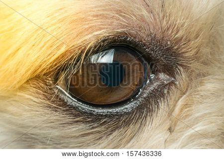 Macro Of Dog Eye