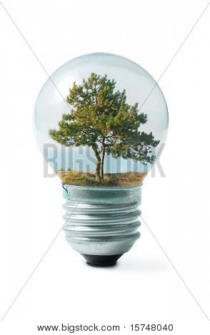 tree on shore in Light bulb collage