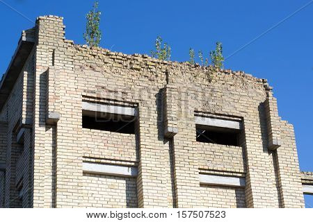 trees grow on the walls of abandoned unfinished brick building