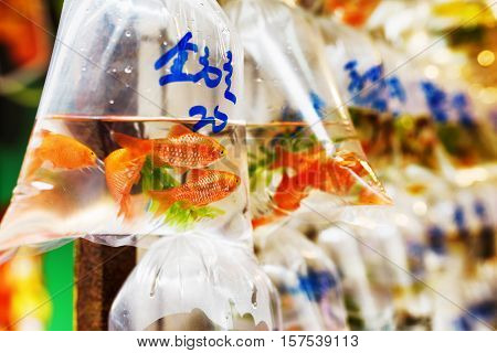 Goldfishes and different fishes for aquarium in plastic bags hanged on the wall in a pet shop selling in Hong Kong. Hong Kong is popular tourist destination of Asia.