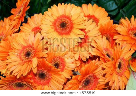 Beautiful Fowers