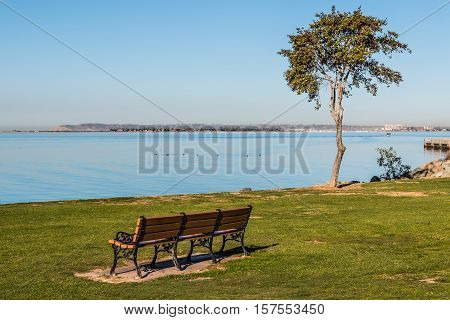 Bench and tree facing San Diego Bay at the Chula Vista Bayfront park, with Point Loma at the horizon line.
