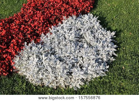 image of many red little flowers at day