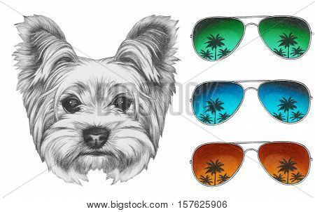 Portrait of Yorkshire Terrier Dog with mirror sunglasses. Hand drawn illustration.