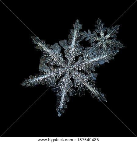 Two snowflakes isolated on black background. This is macro photo of real snow crystals: flat cluster of two stellar dendrites with traditional shape and ornate arms with many small details.