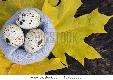 Quail Eggs In The Nest Of The Yellow Leaves At The Wool Nest