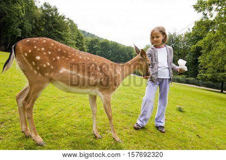 Little girl feeding roe deer on farm.