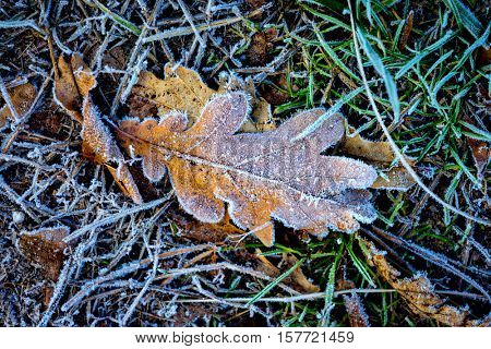 Frozen oak leaf on grass - abstract natural background