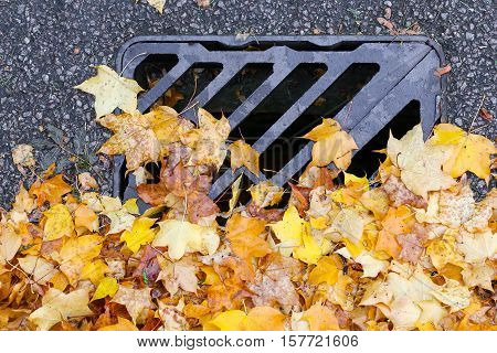 Road Drainage Metal Grill Drain Cover With Autumn Maple Leaves