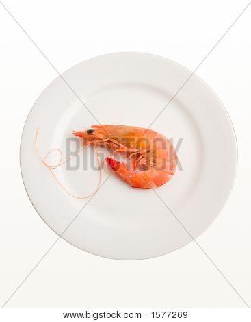 Single Prawn On Plate
