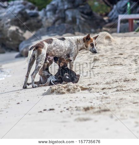 mother dog feeding the baby dog , On the beach