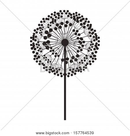 silhouette dandelion with stem and pistil vector illustration