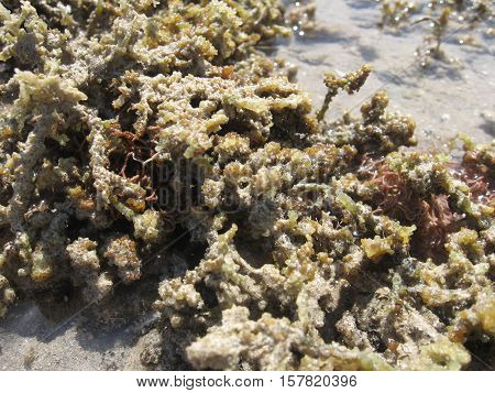 Algae in transparent sea water on the sandy bottom