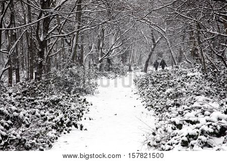 London, UK - Jan 20, 2013 :  People enjoying a winter stroll in a heavy fall of snow on Wandsworth Common