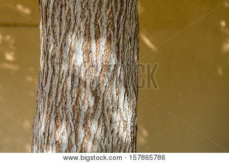 Closeup of tree bark in dappled sunlight