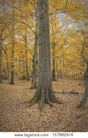 Palsjo park is a woodland area situated within the Swedish city of Helsingborg.