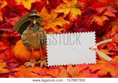 Thanksgiving message Some fall leaves and a turkey sitting on a pumpkin and a blank gift tag with copy-space for your message