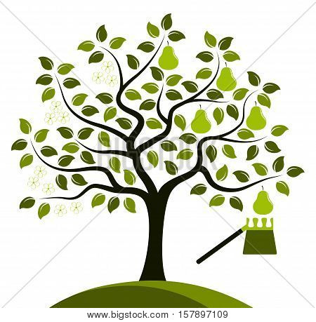 vector pear tree in two seasons and fruit picker isolated on white background