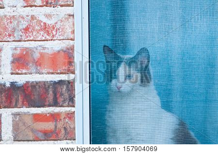 Indoor cat looking out screen window of a brick house