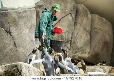 Hamburg, Germany - June 9, Penguin Feeding in Hagenbeck, Hamburg Zoo, on 9 June 2016 in Hamburg, Germany