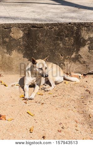 Homeless thai stray dog , pet animal