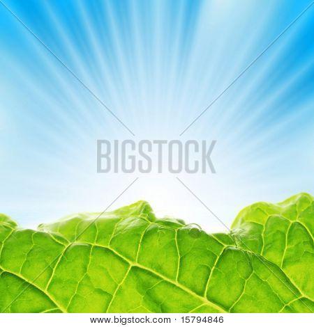 Verde fresco con rayos de sol sobre el cielo azul.