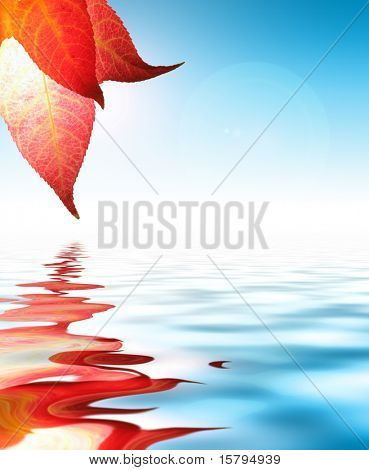 Autumn leaf reflects in water, blue sunny sky behind.