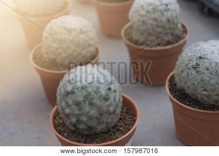 Cactus Flowers in pots colorful flowers pots flowers shop row of Cactus Flowersmany cactus pot in market