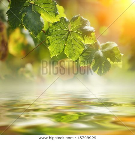 Grape leaves over water. Shallow DOF.