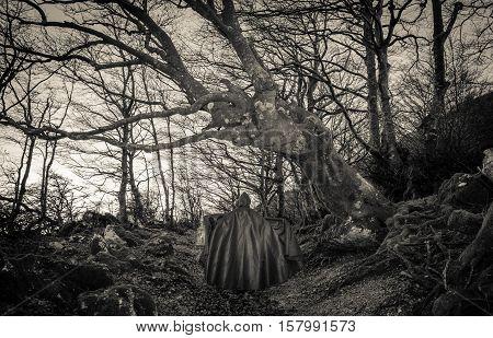 Obscure presence in the dark woods in autumn season