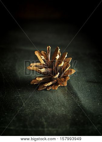 Open pinecone on a rustic grunge background