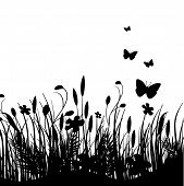 picture of white flower  - Vector grass silhouettes background - JPG