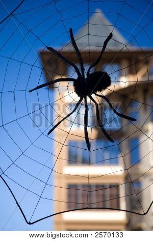 Big Spider Decoration