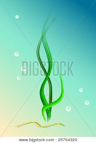 Seaweeds, bubbles, sea floor. Vector illustration