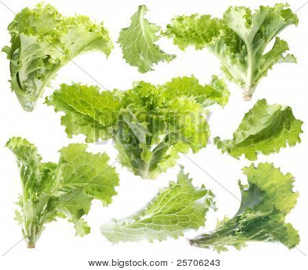 Leaf of green lettuce. Isolated with clipping path