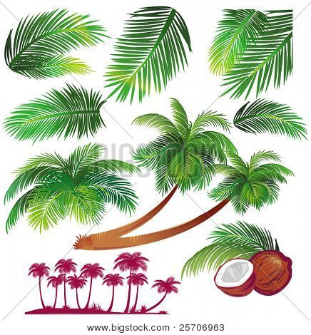 Tropical palms