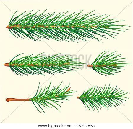 Ramas de pino. Cepillo de Vector