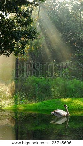 Water Fowl on Still Pond in Forest Under Sun Beams with Beautiful Reflections