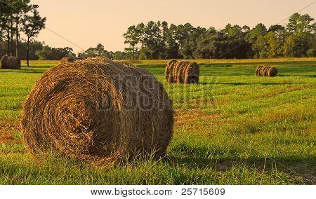 Freshly Harvested Hay Bales at Dusk
