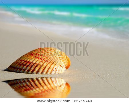 Pretty seashell on beach by tidepool with beautiful ocean in distance