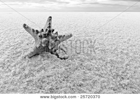Lone starfish in middle of vast sandy landscape