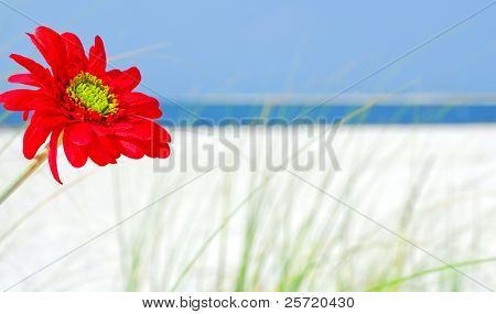 Beautiful red flower on gorgeous beach with ocean in distance