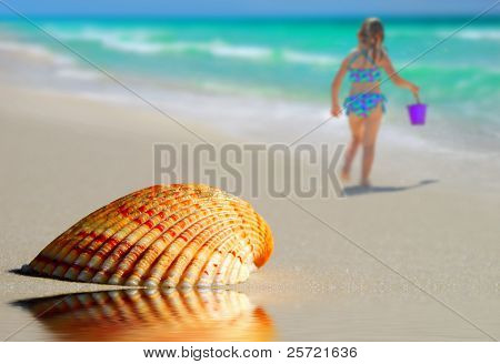 Pretty seashell on beach by tidepool with child and ocean in distance